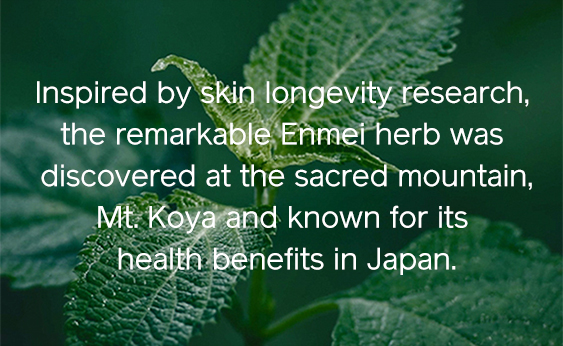 The remarkable Enmei herb
